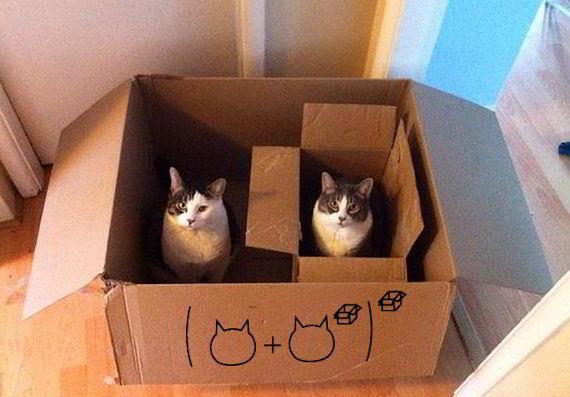 Кот в коробке с коробкой с котом. Да, именно так.